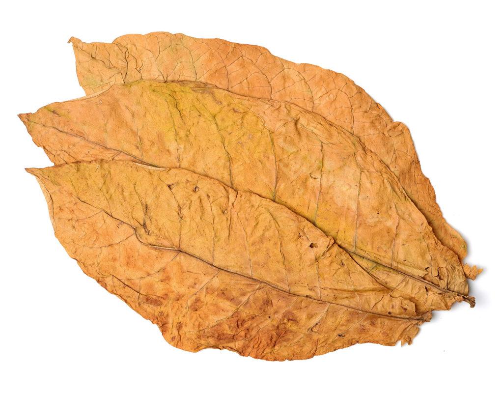 Comprar Folha de Tabaco